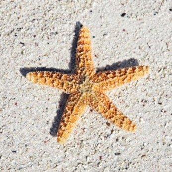 estrellamar